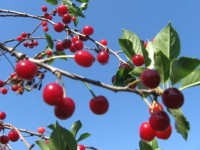 Компот вишневий натуральний з прянощами