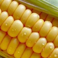 Кукурудза, смажена з цибулею