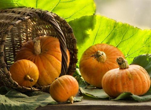 Гарбуз: смачні та корисні страви