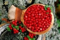 Варення журавлинне з горіхами