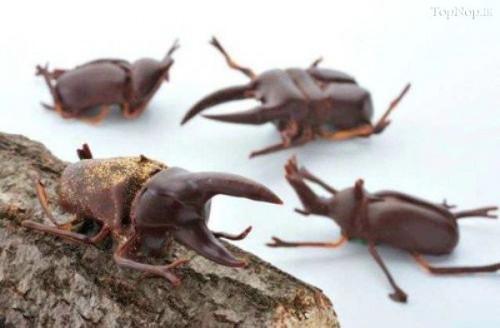 У Франції почали випуск шоколаду з комахами